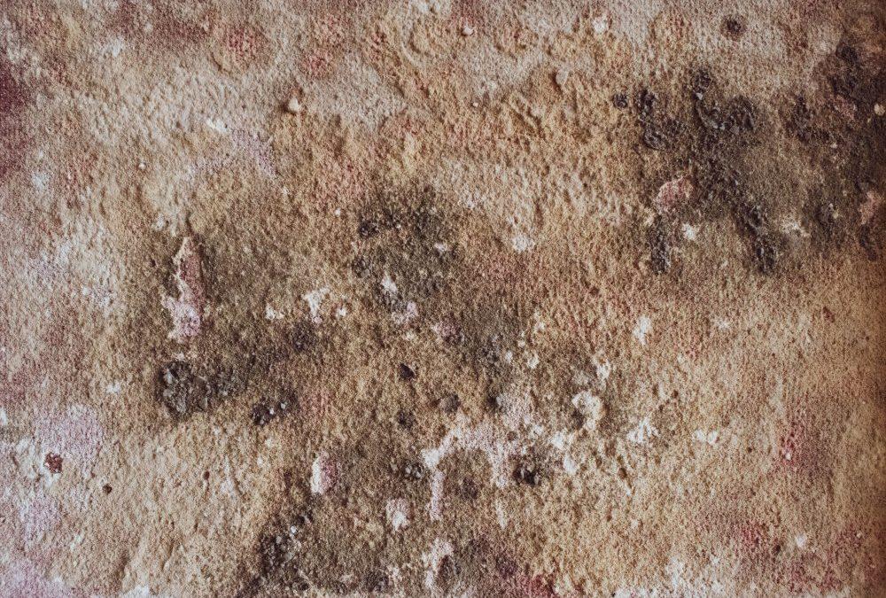 Upptäck ett angrepp av mögel innan det hinner få för stor spridning med hjälp av ett mögeltest