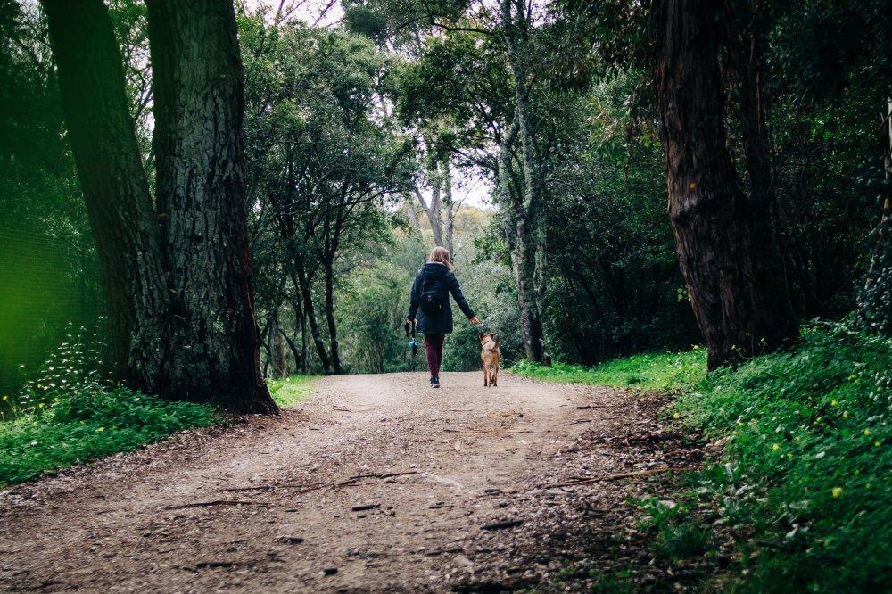 Tips i sensommaren: Ett litet äventyr med hunden i skogen